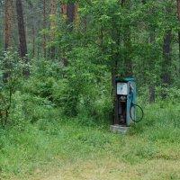 В лесу в Алтайских горах :: Андрей Замышляев