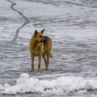 По тонкому льду :: Александр