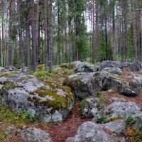 В лесу среди камней. :: Александр Максименко