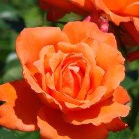 Цветочный хоровод-388. :: Руслан Грицунь