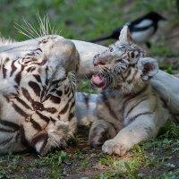 Мать и дитя :: Владимир Габов