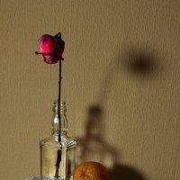 """..и пока еще жива, роза красная в бутылке.."""" :: Jeller J."""