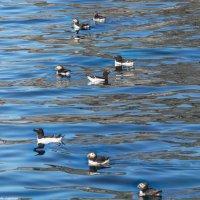 Северные птицы :: Надежда Лаптева