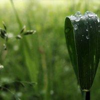 После дождя :: Ирина Румянцева