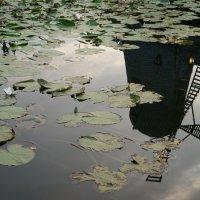 В опроктнутом Мире мир очень красив... :: Алёна Савина