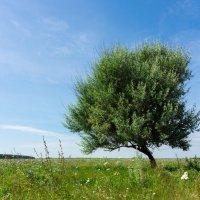 Дерево :: Alex Bush