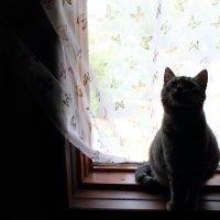 Cat :: Виталий Шимко