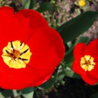 Цветики :: Ann
