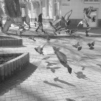 полет голубей :: Анна Квициния