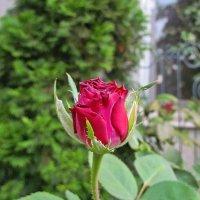 цветы удома :: Александр Корчемный