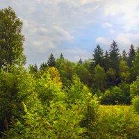 из леса в лес :: Юрий
