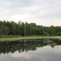 Озеро в лесу. :: Борис Митрохин