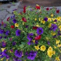 Моё разноцветное лето.... :: Алёна Савина