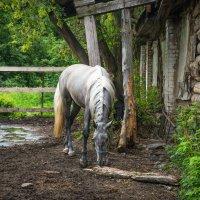 Лошадь. :: Ольга Некрасова