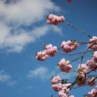 Цветочный хоровод-395. :: Руслан Грицунь