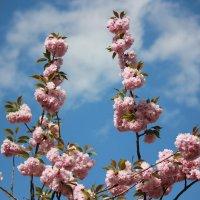 Цветочный хоровод-392. :: Руслан Грицунь
