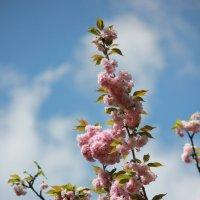 Цветочный хоровод-391. :: Руслан Грицунь