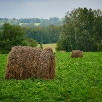 В поле :: Георгий Муравьев