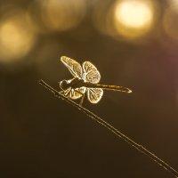 Золотая стрекоза :: Марина