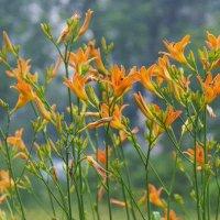 Зацвели цветы в саду у дяди Вани :: Владимир Максимов