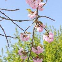 Цветочный хоровод-398. :: Руслан Грицунь