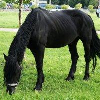 Лошадь - это красота, которой можно любоваться неустанно :: Елена Павлова (Смолова)