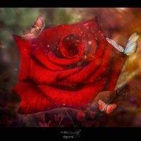 Роза из маминого сада :: Anastasiya Ageeva