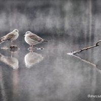 Туман на озере. Фото 3. :: Вячеслав Касаткин