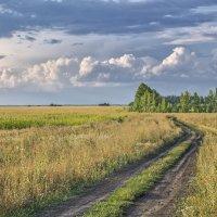 Полевая дорога :: Эркин Ташматов
