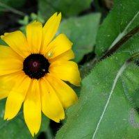 Солнечный август...2 :: Тамара (st.tamara)