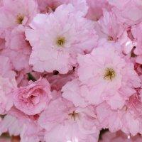 Цветочный хоровод-403. :: Руслан Грицунь