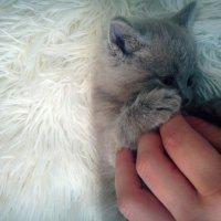 котик :: Анастасия Пушкарева