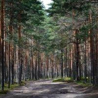 Дорога в лесу :: Галина Galyazlatotsvet