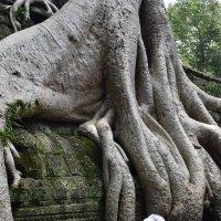 """Камбоджа, храм """"Та Пром"""" :: Андрей"""