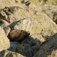 жизнь среди камней :: Alima Назарова