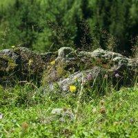 Камень :: Дарья Фотолюбитель