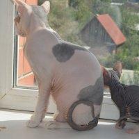 Кошка с котенком :: Оксана Белова