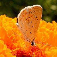 Всё вокруг оранжево! :: Алтай Сейтмагзимов