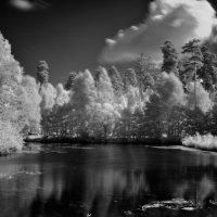 Тихая заводь :: Виктор Берёзкин