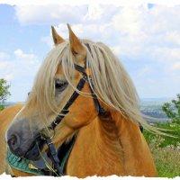 Блондинка с травинкой. :: Валентина ツ ღ✿ღ