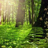 Лето в лесу :: Денис Масленников