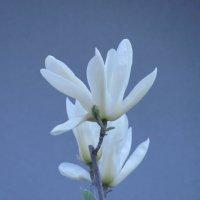 Цветочный хоровод-419. :: Руслан Грицунь