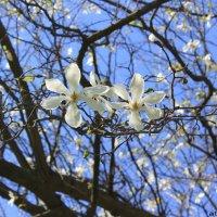 Цветочный хоровод-416. :: Руслан Грицунь