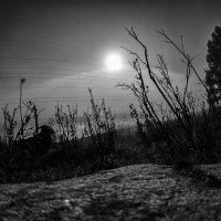Ночь туман и козел :: Александр Решетников