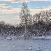 На Лебедином озере :: Галина Шепелева