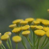 цветок :: Сергей Жарков