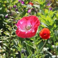 в саду :: андрей шилов