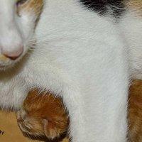 Катя с малышом :: Наталья (ShadeNataly) Мельник