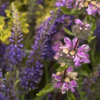 Луговые цветы :: Алексей Масалов