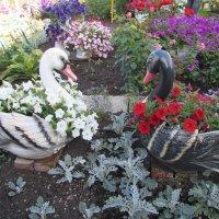 цветы и лебеди :: Валерий A.